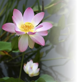 lotus flower home